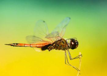 Mosquito Africa Malaria