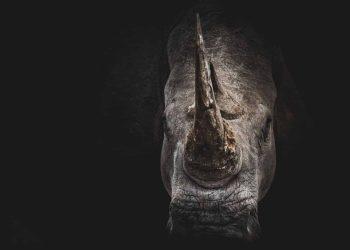 Rhino poachers sentenced in time for World Rhino Day